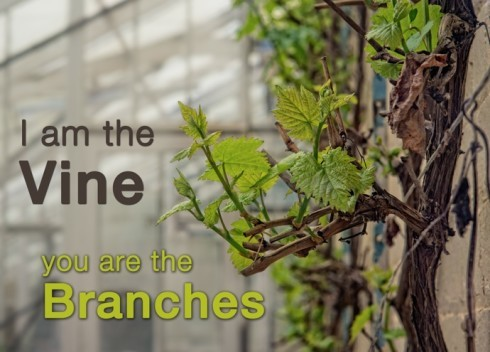 I Am The Vine You Are The Branches1 E1429178067562